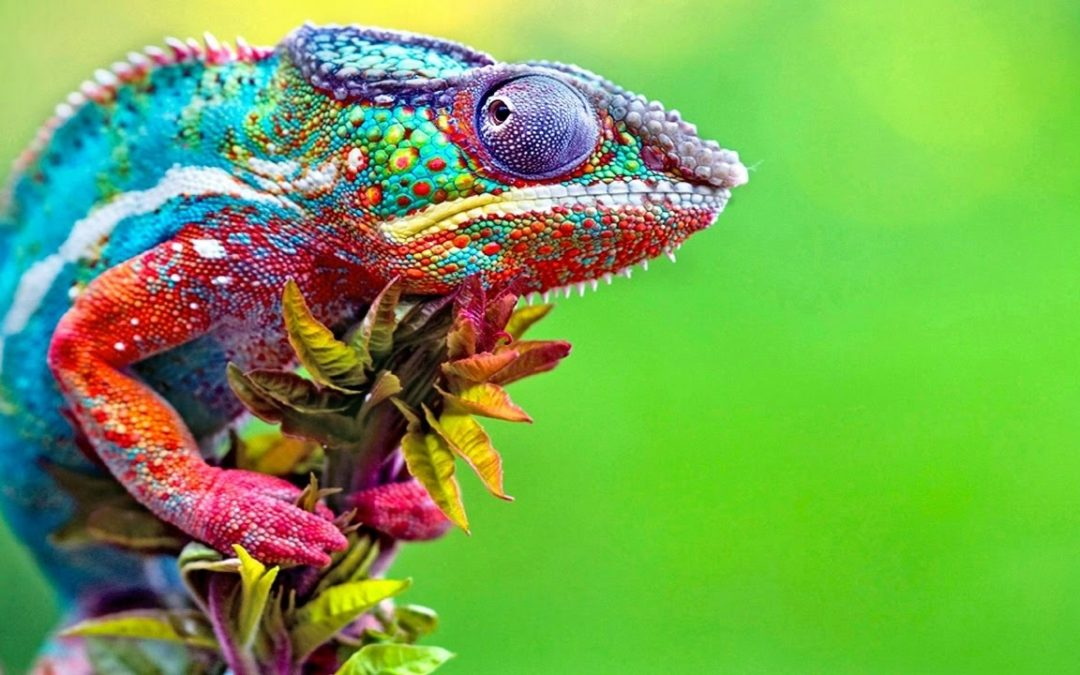 Want To Create an Attention-Grabbing Headline That Rivals a Chameleon?